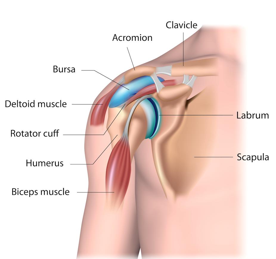 Shoulder impingement | | Shoulder Pain | Your Pilates Physio